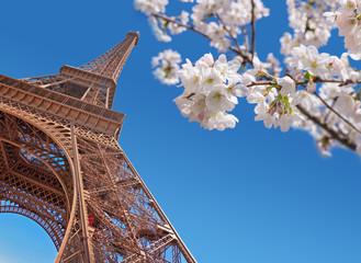 Obraz na Szkle Optyczne powiększenie Eiffel tower and cherry blossom, Paris at springtime concept