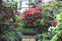 Bright Multicolored Camellia B...