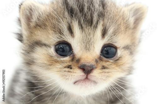 Foto op Aluminium Kat 子猫