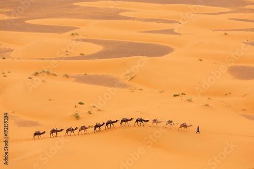 Poster Oranje eclat Camels caravan in Desert Sahara in Morocco, dunes in background
