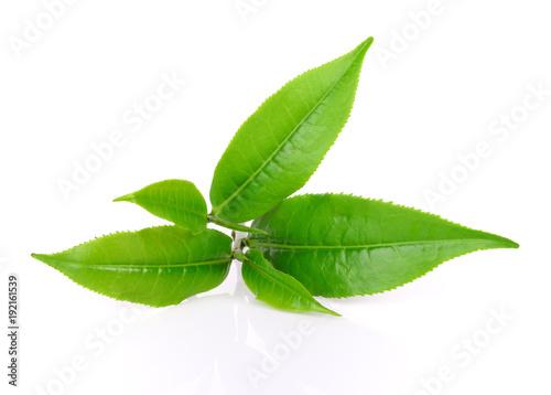 green tea leaf on white background