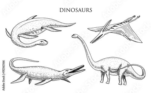 Photo  Dinosaurs Elasmosaurus, Mosasaurus, Barosaurus, Diplodocus, Apatosaurus, Pterosaur, skeletons, fossils, winged lizard