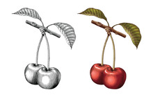 Cherry Hand Drawing Vintage Engraving Illustration Black And White With Fill Color