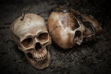 Scary Skull On Dirty Soil.