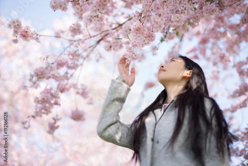 Junge Asiatin bewundert die Kirschblüte im Frühling Wallpaper Mural