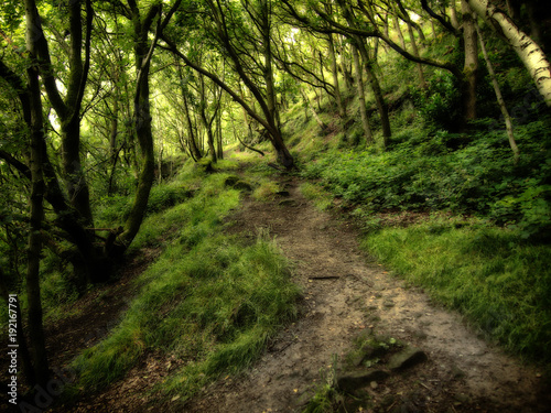 Keuken foto achterwand Weg in bos dark dense green forest with overhanging trees over a woodland pathway