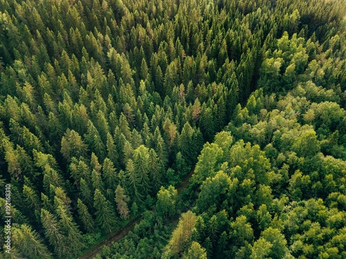 Papiers peints Forets Aerial top view of summer green trees and road in forest in rural Finland.