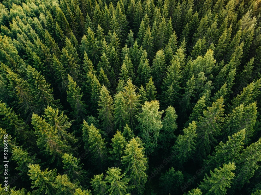 Fototapety, obrazy: Aerial top view of summer green trees in forest in rural Finland.
