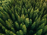 Fototapeta Forest - Aerial top view of summer green trees in forest in rural Finland.