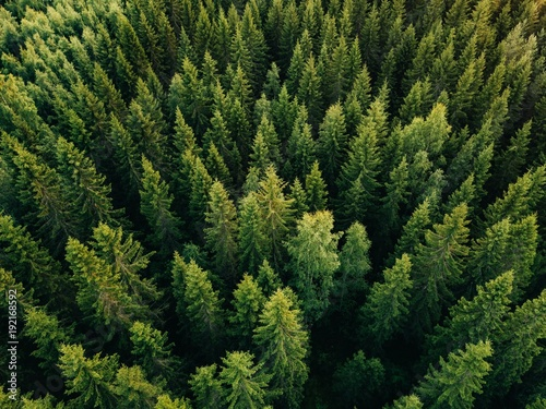 Spoed Fotobehang Bos Aerial top view of summer green trees in forest in rural Finland.