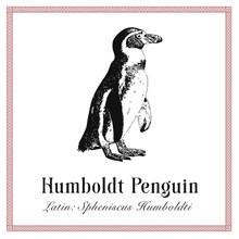 Humboldt Penguin Engraving Ill...