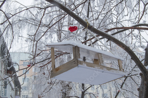 Fotomural Wooden feeding trough for birds hanging on the tree of Rowan, covered with snow