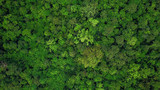 Aerial top view of the tropical rain forest.