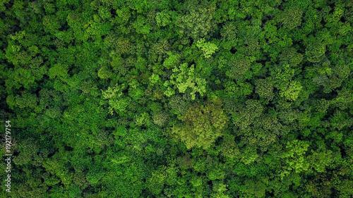 Widok z lotu ptaka tropikalny las tropikalny.