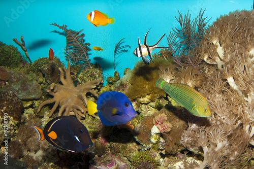 Staande foto Koraalriffen Reef Fishes in Aquarium