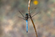 The Dragonfly Is Resting