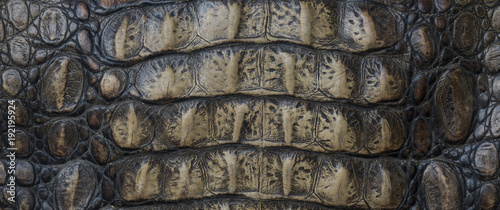 crocodile skin, abstract background