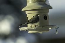 Dark Eyed Junco Bird At A Bird...