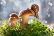 Белые грибы раст...