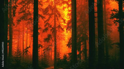 Obraz na płótnie Las pożarniczy