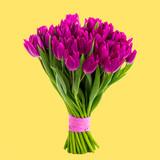 Fototapeta Tulipany - purple tulips on a yellow background, spring greeting card