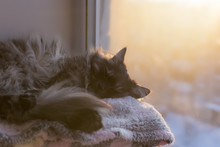 The Cat Is Sleeping On A Lounger At Sunset