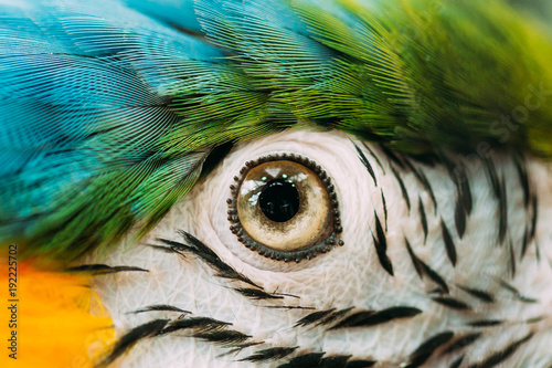 Poster de jardin Perroquets Eye Of Blue-and-yellow Macaw Also Known As The Blue-and-gold Macaw In Zoo