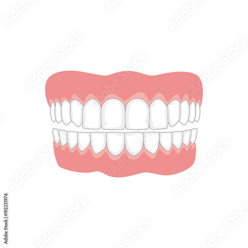 Photo Jaw with teeth on white background, medicine concept.