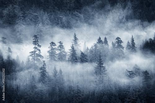 chmury-nad-lasem