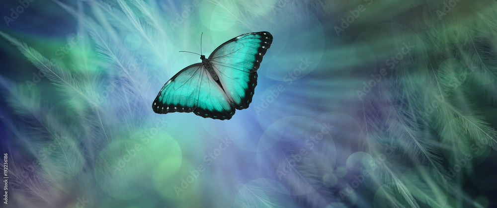 Fotografie, Obraz Soul Release Metaphor for departing soul - lone jade green  coloured butterfly s