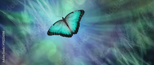 Fotografía  Soul Release Metaphor for departing soul - lone jade green  coloured butterfly s