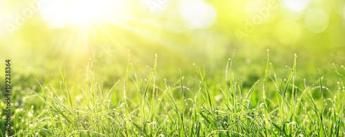 Door stickers Yellow Gras im Frühling