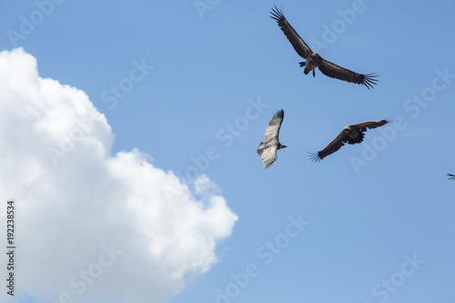 Spoed Foto op Canvas Vogel Low angle view of birds flying against cloudy sky