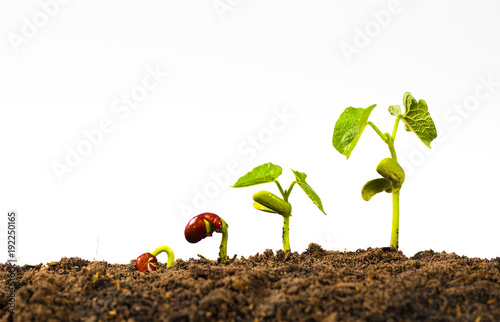 seed germination on white background
