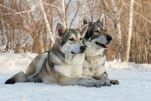 Beautiful Male And Female Of S...
