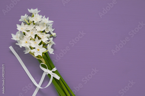 White narcissus blooms tied with ribbon on purple background Canvas Print
