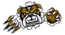 Bulldog Sports Mascot Ripping ...