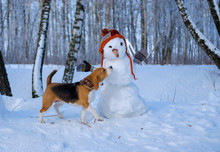 Beagle Dog And Snowman In The ...