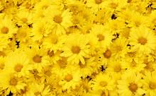 Beautiful Dandelion Background...