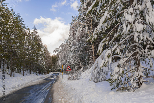 Snow on the needles of pine tree in the wood in winter - Volcano Etna Park, Sici Canvas-taulu