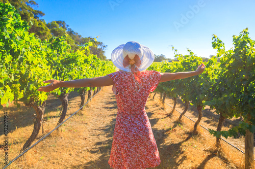 Obraz Australian vineyard. Carefree blonde woman with open arms among the rows of grapes, enjoys the harvest in Margaret River known as the wine region in Western Australia. - fototapety do salonu