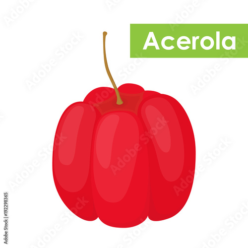 Photo Vector acerola berry, Barbados cherry superfood, antioxidant