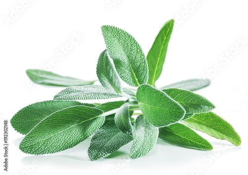Fototapeta Fresh velvet leaves of garden sage on the white background. obraz