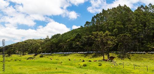 Fotografie, Obraz  Pasto com gado.