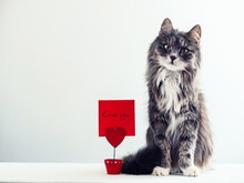 Charming, Furry Cat Near The Holder For Papers In The Form Of A Heart With A Note For Important Events