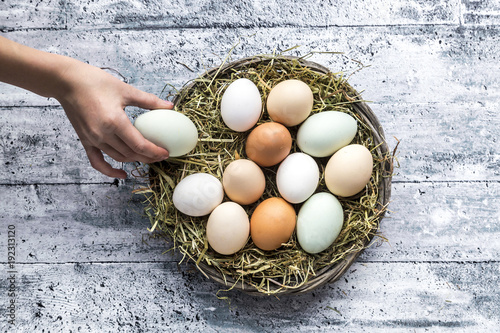 Image result for hand reaching in to a nest