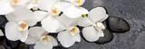 Fototapeta Kuchnia - Spa stones and white orchid.