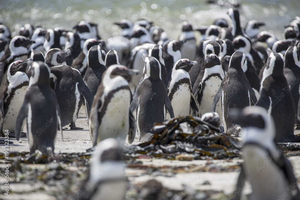 Penguins Colony South Africa