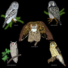 Set Of Realistic Owls On Branc...