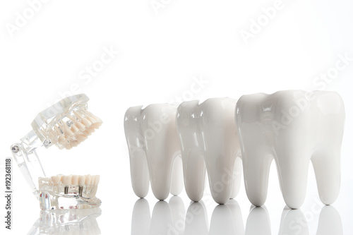 Dental teeth model, denture jaw model and medical dentist equipment tools over white background, close-up #192368118